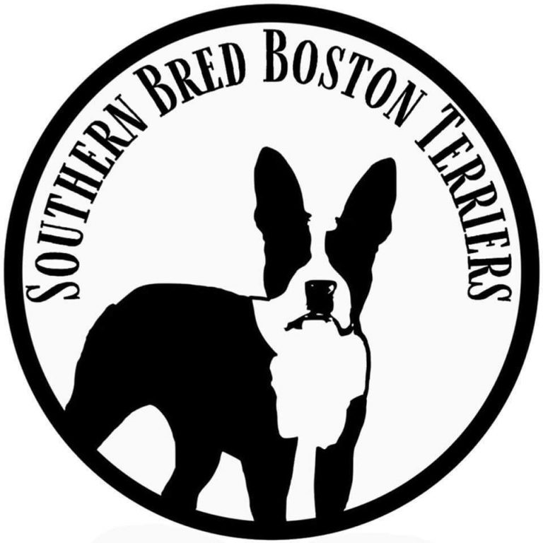 Southern Bred Boston Terrier Puppies